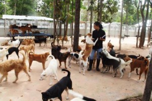 Soi Dog на Пхукете