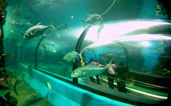 аквариум на пхукете