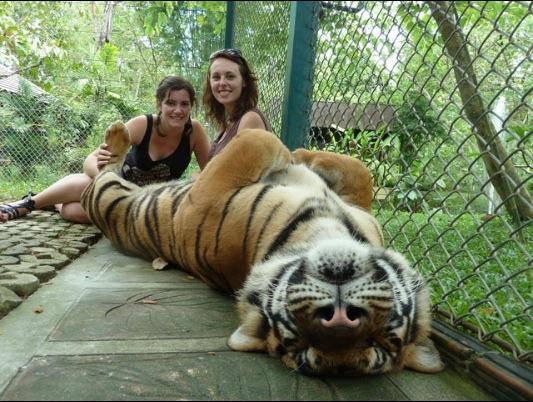 тигриный зоопарк на пхукете