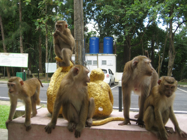 гора обезьян пхукет