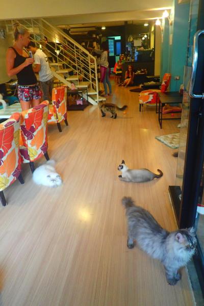 кошачье кафе cat cafe