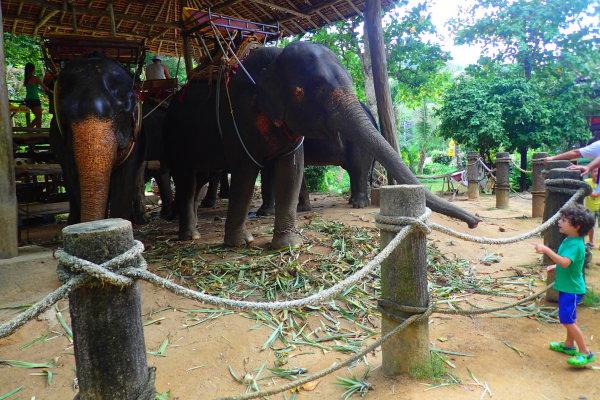 слоны на Пхукете